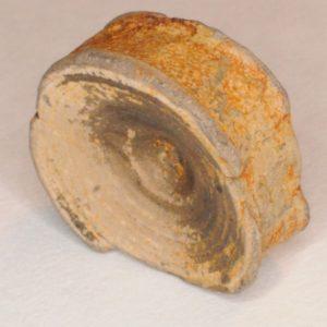 Sawfish (Ischyrhiza mira) Vertebra, Cretaceous, New Jersey